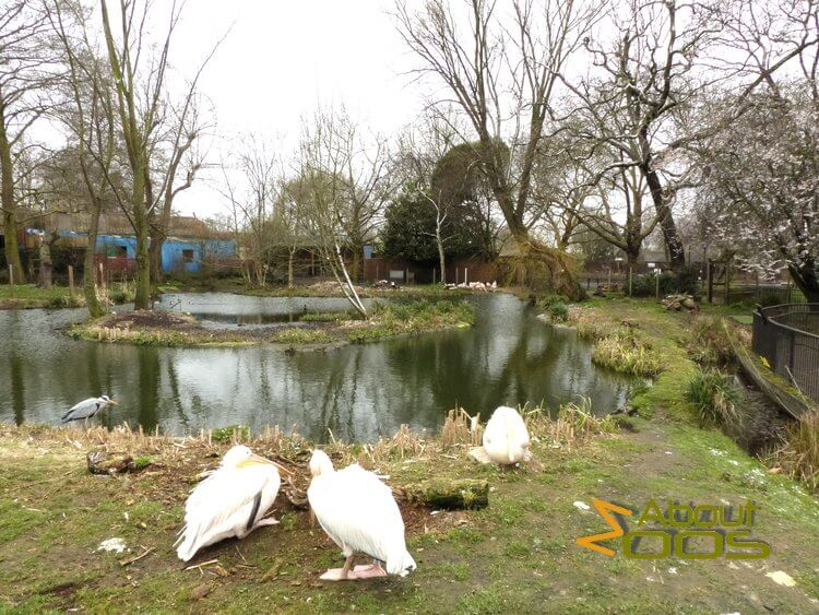 Three Island Pond in London Zoo