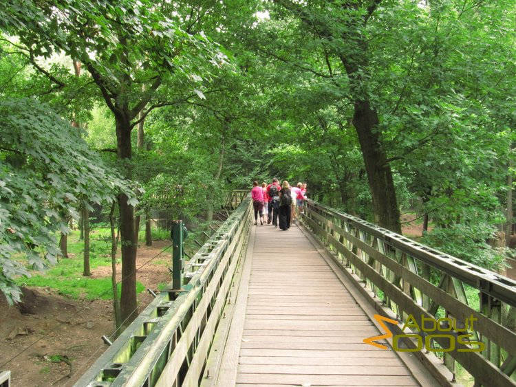 walkway through bear forest