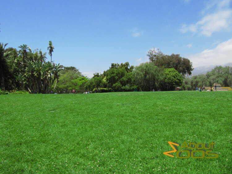 santa barbara zoo recreation meadow