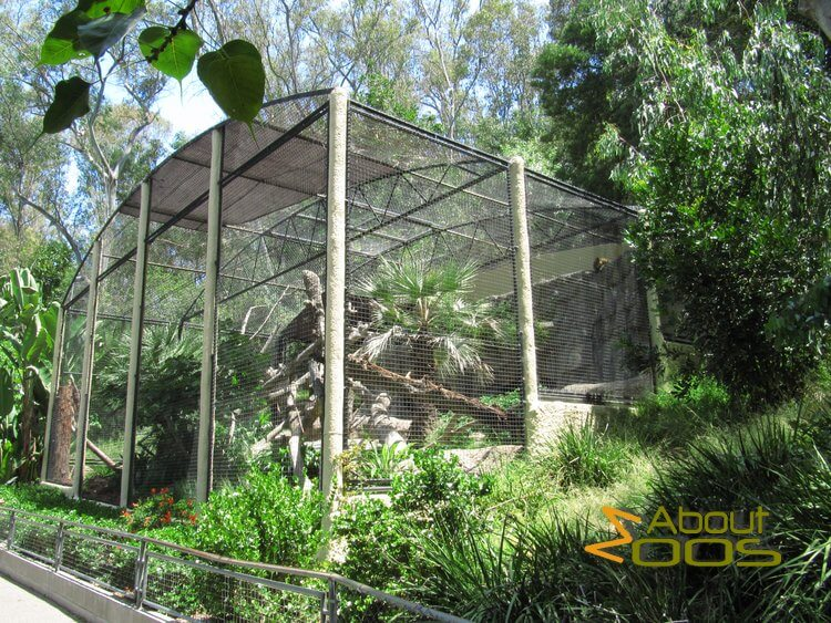 big cat enclosure design