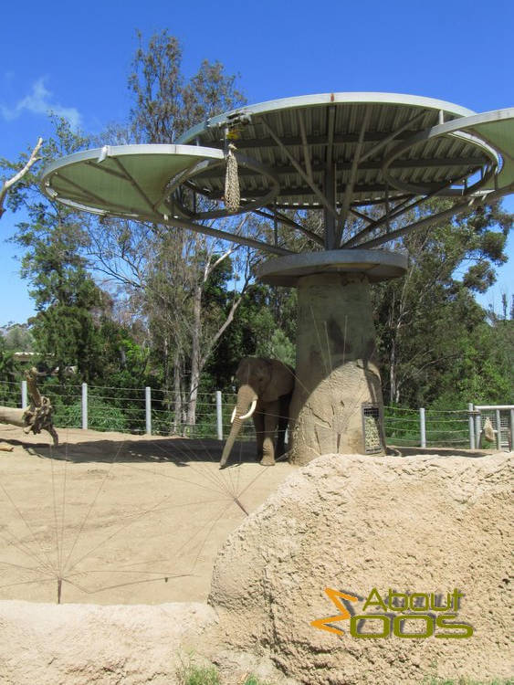 elephant feeding enrichment system
