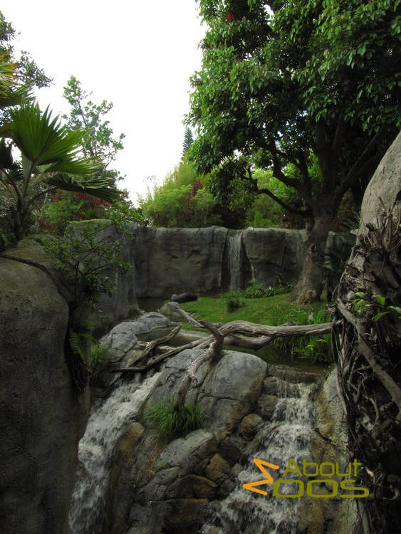 Gorilla enclosure