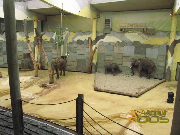 Vienna Zoo, Tiergarten Schönbrunn | About Zoos