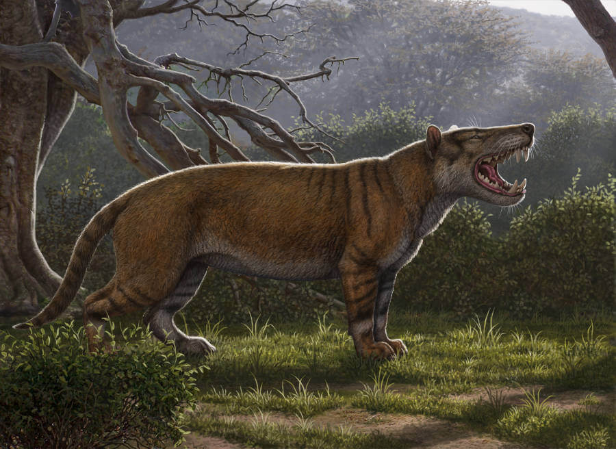 Gigantic mammalian carnivore discovered - fossils found in museum drawer in Kenya